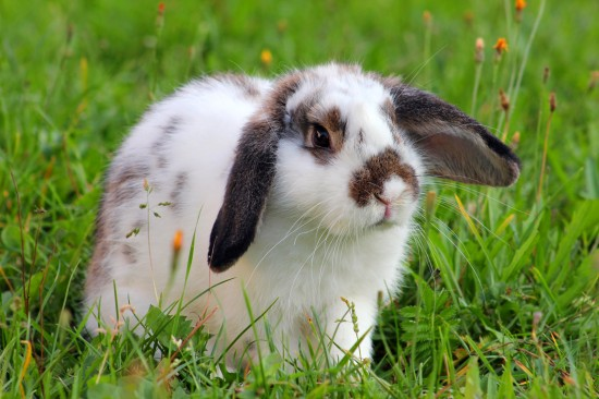 40-interesting-rabbit-facts-53abe0ea442a0
